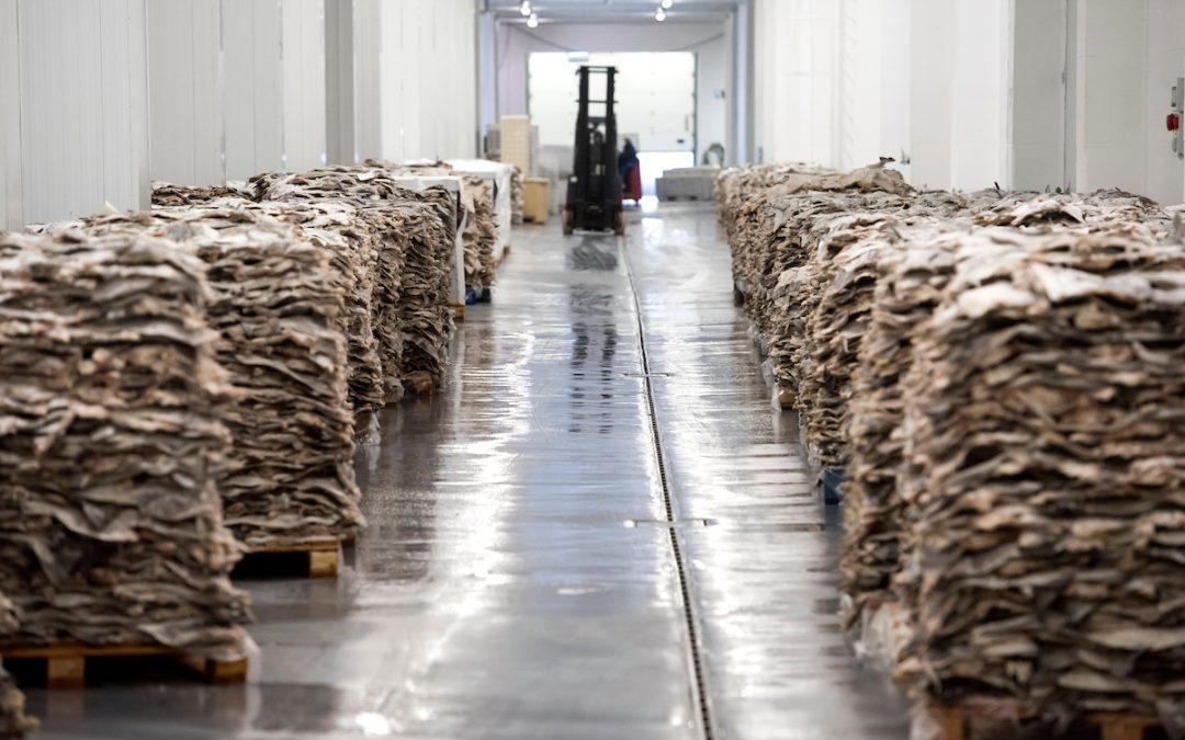 Riberalves investe 4 milhões na fábrica da Moita