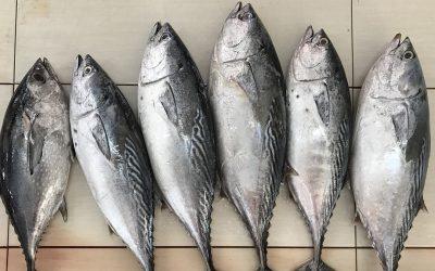 Nova fábrica de atum em Cerveira terá produção de 20 mil toneladas anuais
