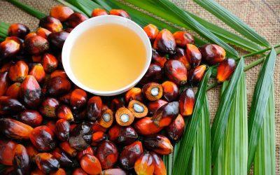 Ferrero revela lista de fornecedores de óleo de palma