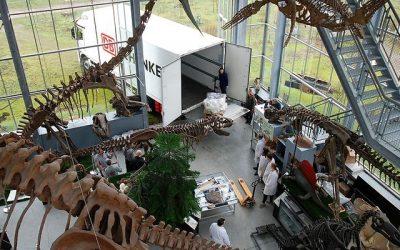 Dinossauro com 150 milhões de anos transportado pela DB Schenker