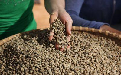 Nestlé ambiciona atingir a totalidade de cultivo sustentável para os seus cafés até 2025