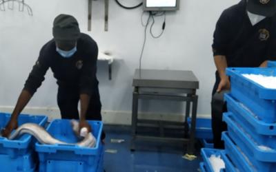 Parceria inédita permite entregas de pescado fresco em 24 horas