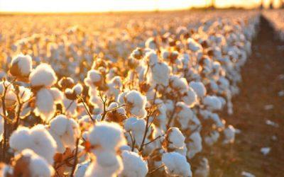 Aumento do preço das fibras afecta sector têxtil