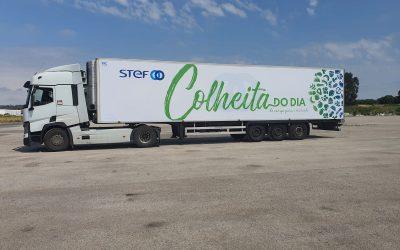 STEF Portugal lança novo serviço para o mercado das Frutas e Legumes